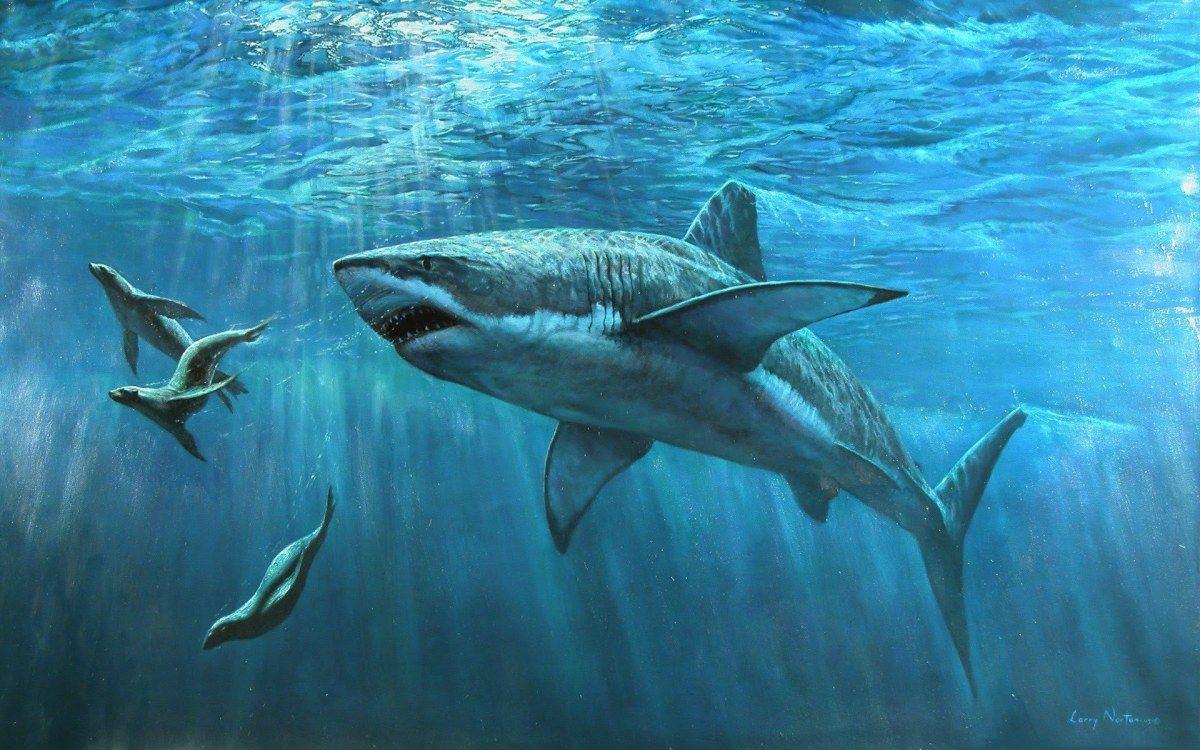 Le Grand Requin Blanc : Tout Savoir Sur Carcharodon Carcharias