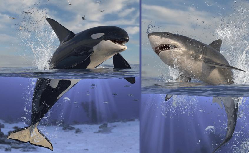 Orque Vs Requin