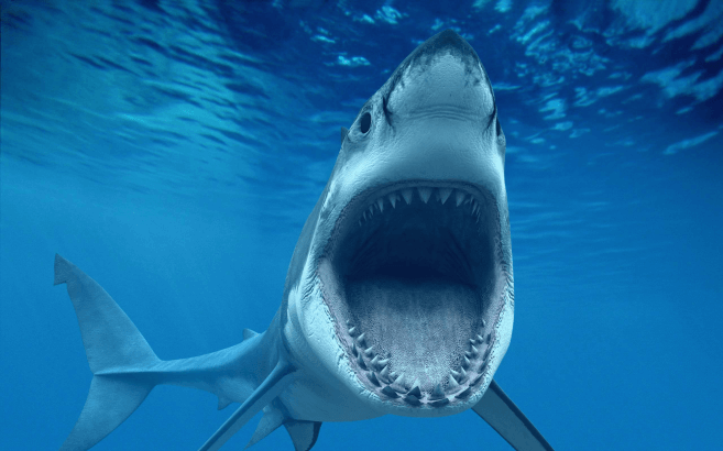 Requin blanc attaque