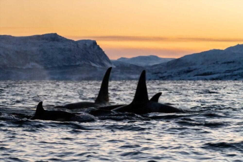 Chaleur corporelle orque