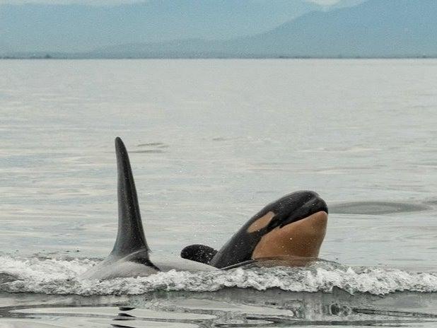 Petit orque et sa grand-mère