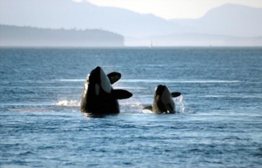 Petit orque et mère