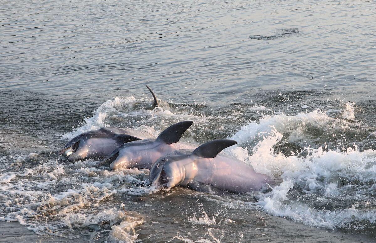 Plage des dauphins