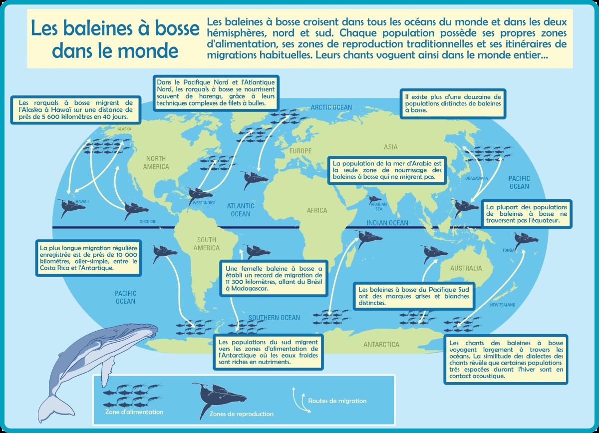 Répartition de la baleine à bosse