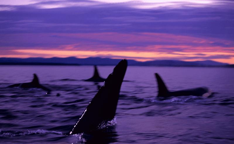 Groupe orques