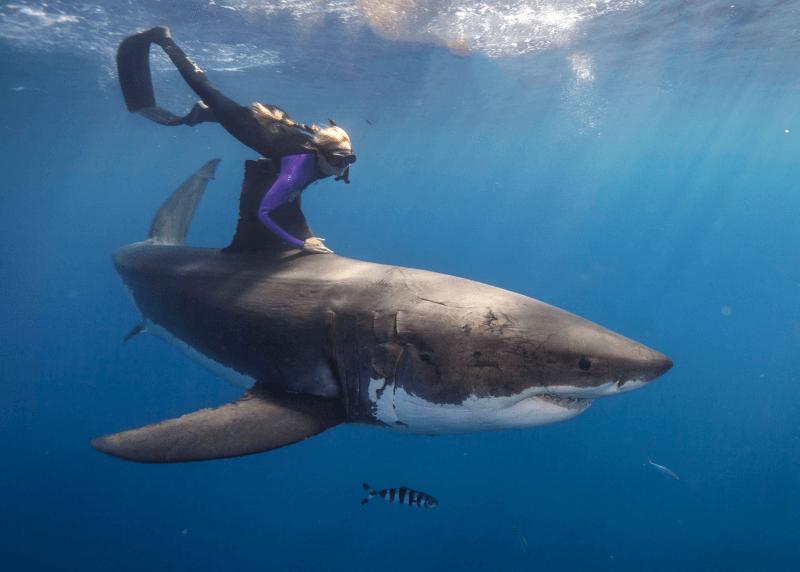 Ocean Ramsey et Bella