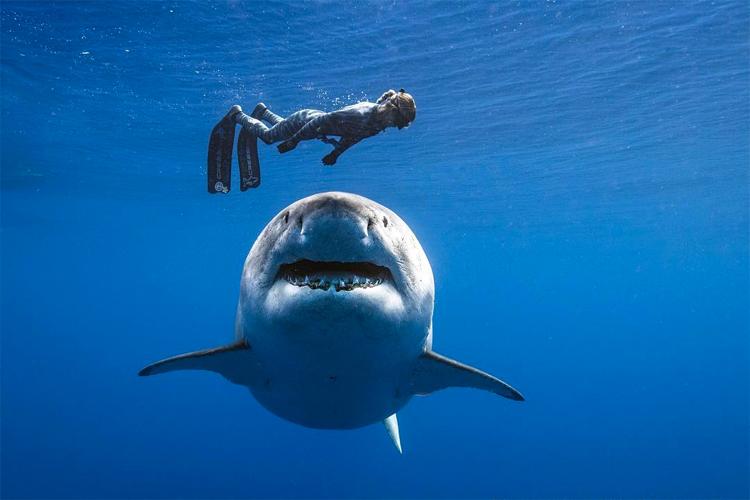 Ocean Ramsey et Deep Blue