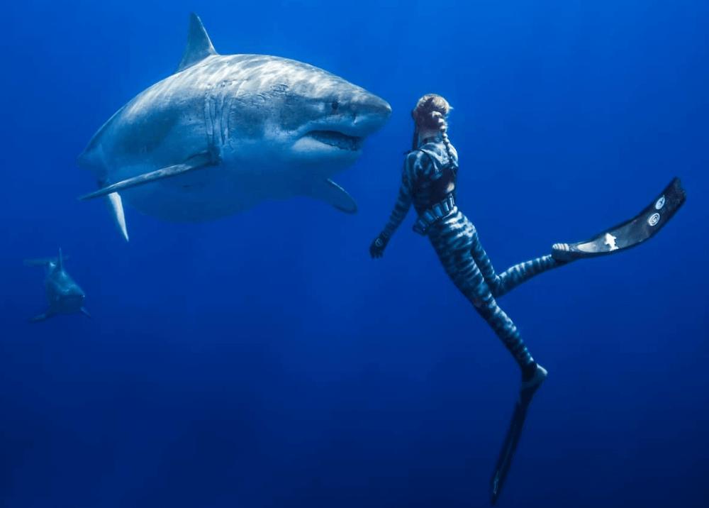 Ocean Ramsey et le requin blanc