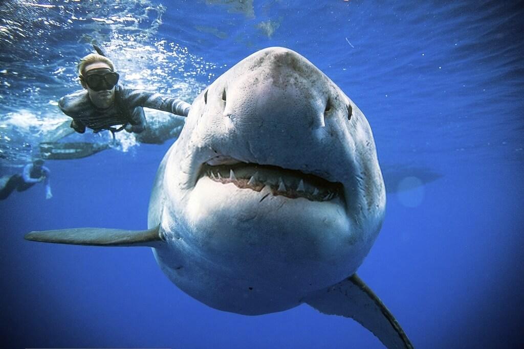 Ocean Ramsey et requin
