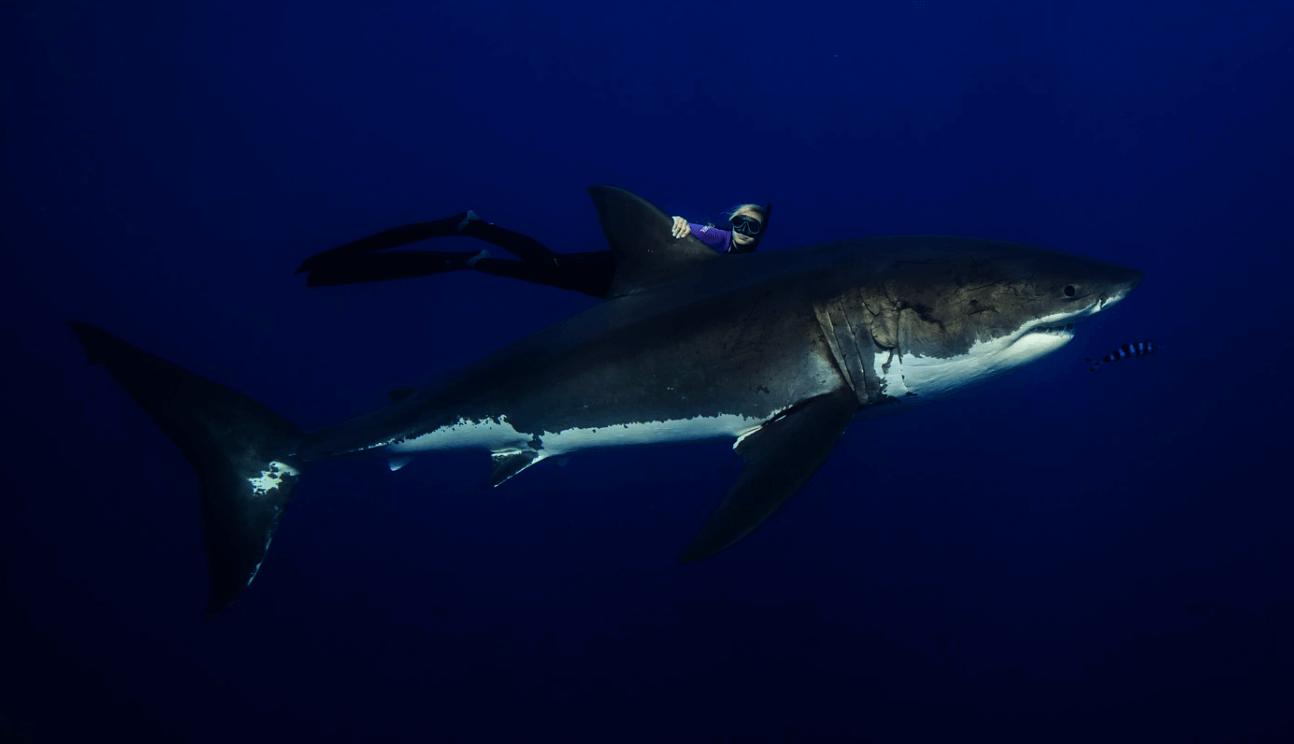 Ocean Ramsey, Nageuse En Faveur De La Protection Des Requins