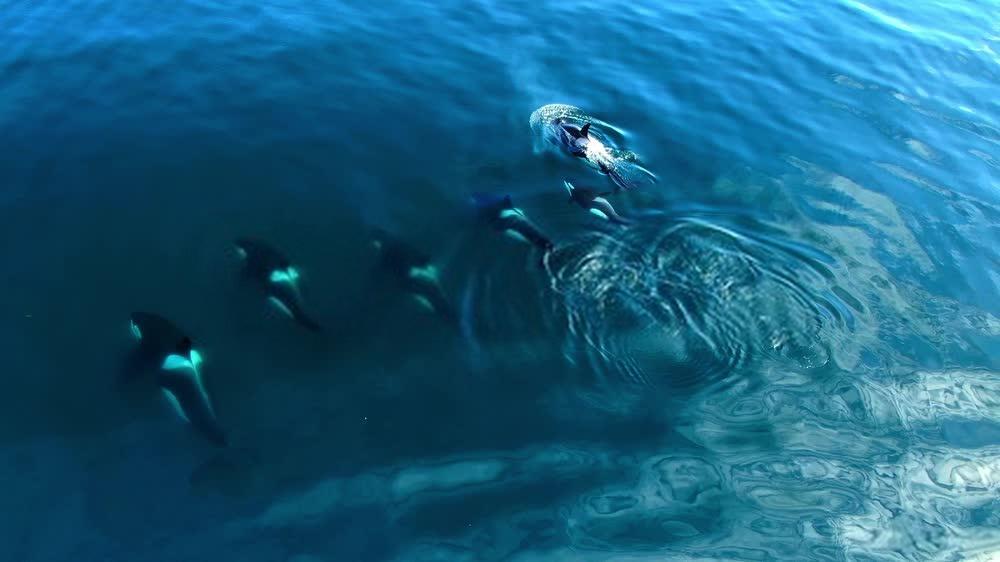 Orques drone