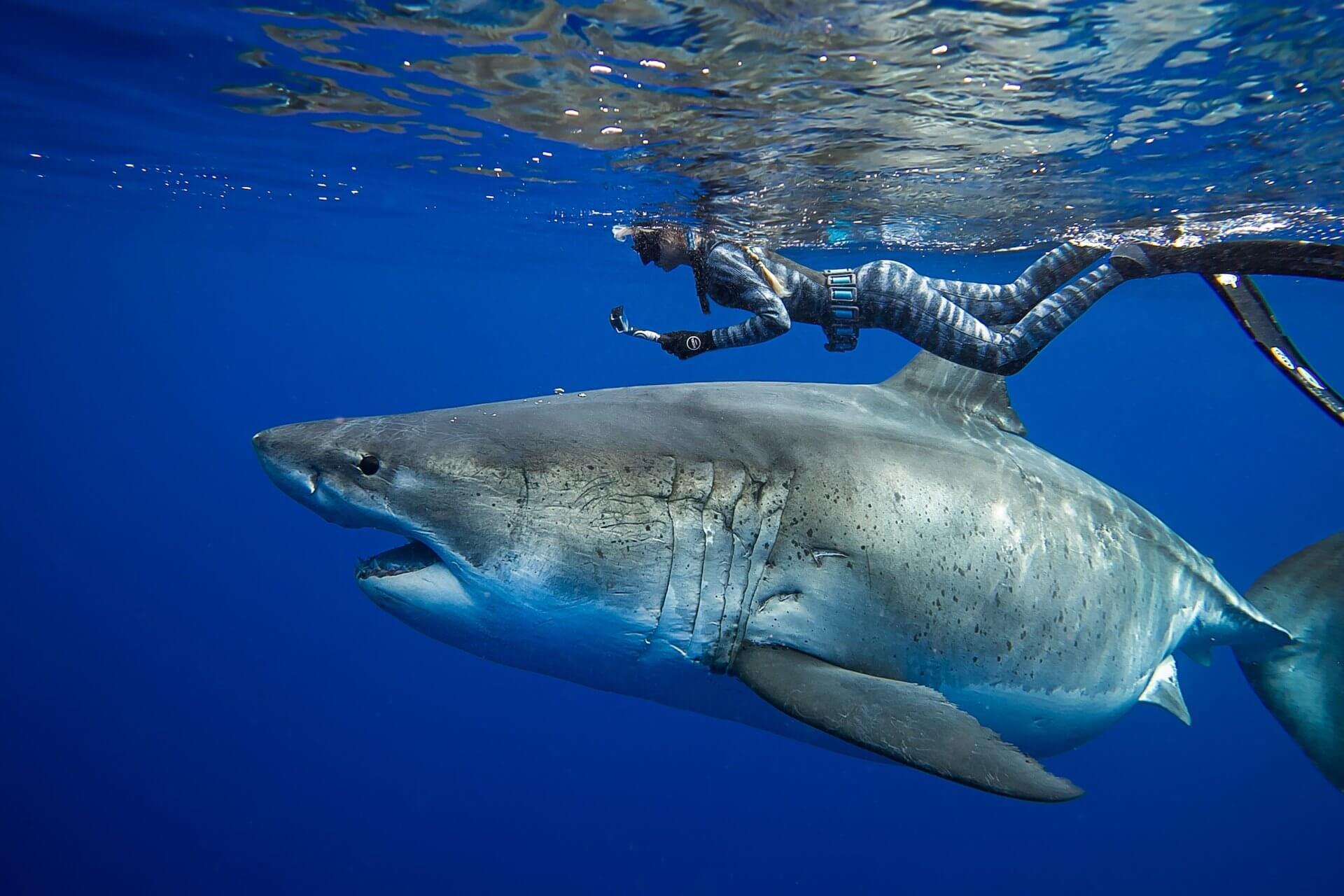 Protection des requins