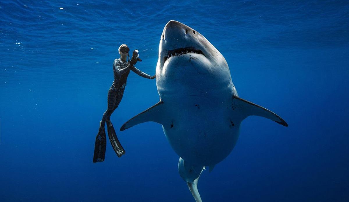 Requin blanc et Ocean Ramsey