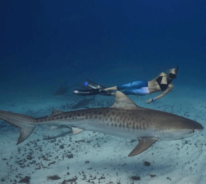 Sauvegarde des requins