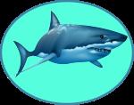 Catégorie rencontre des requins blancs