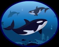 Histoires d'orques