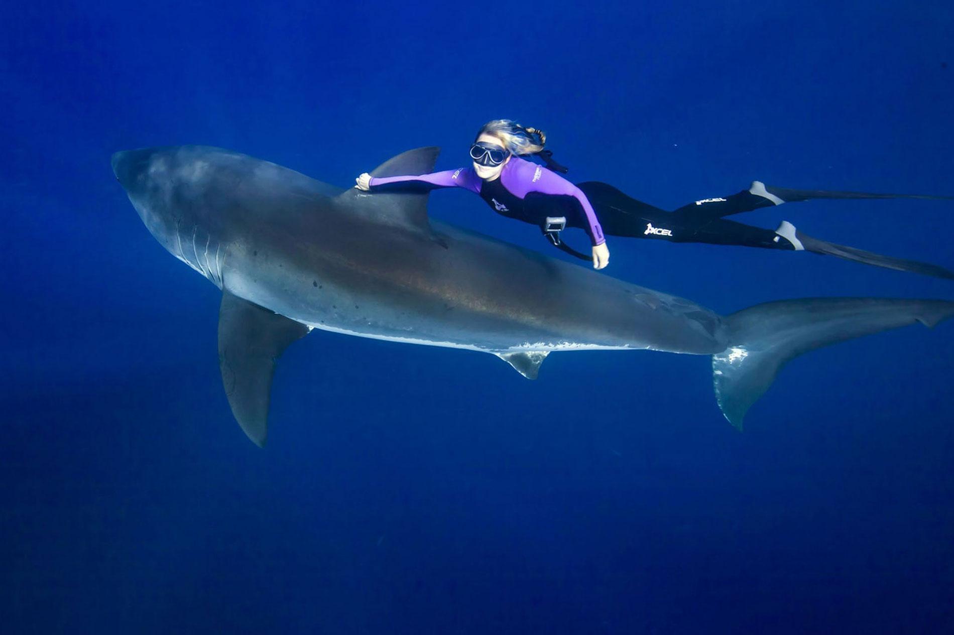 Ocean Ramsey grand requin blanc
