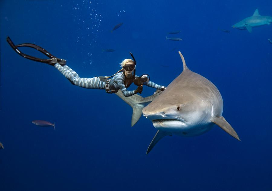 Ocean Ramsey requin tigre