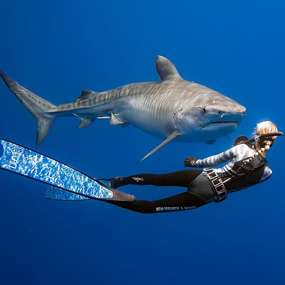 Ocean Ramsey shark