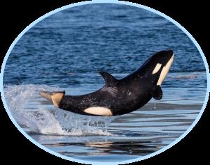 Actualites animaux marins