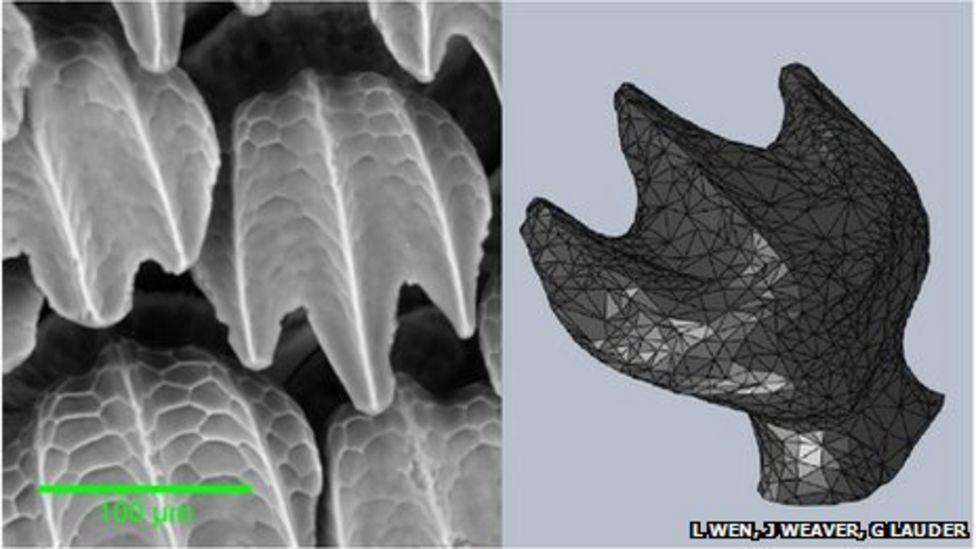 Gros plan de la peau du requin et ses denticules placoïdes