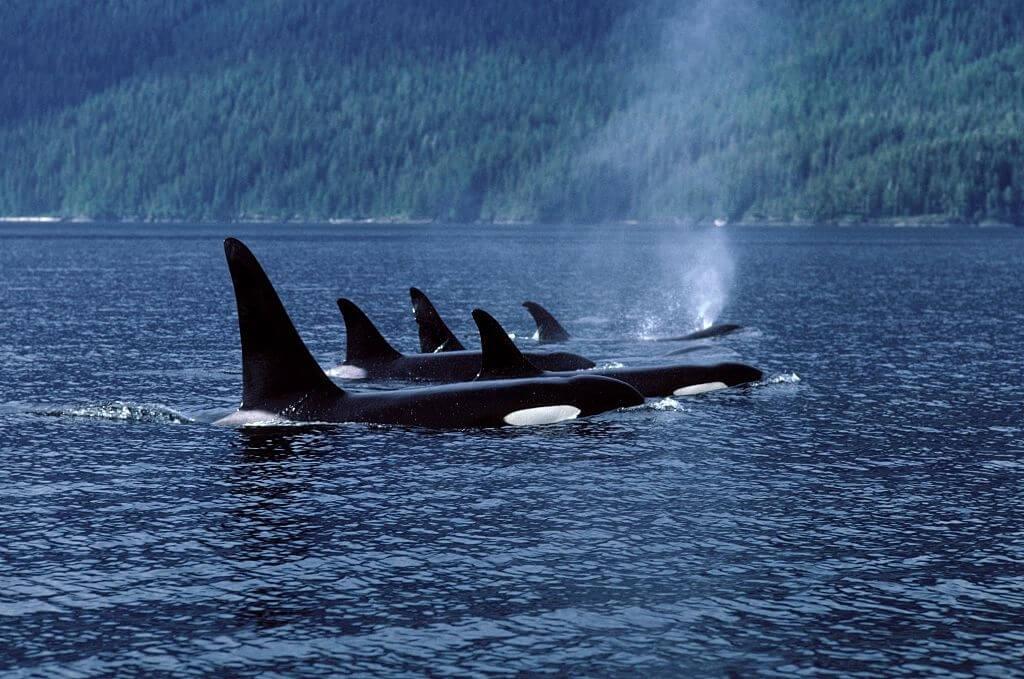 La Sieste De L'orque