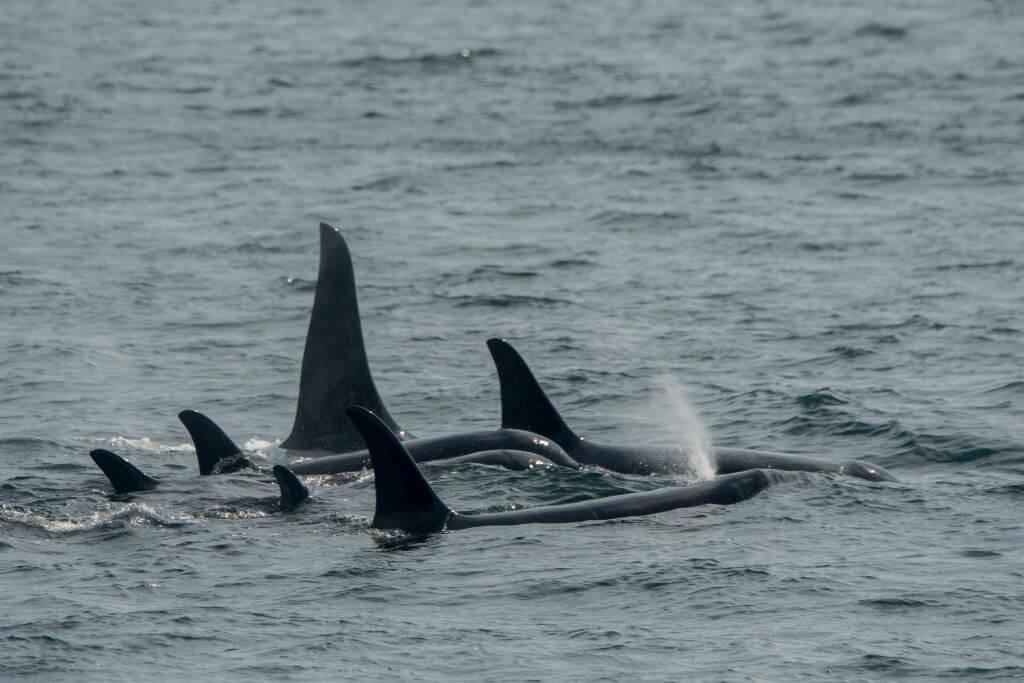 Sommeil des orques