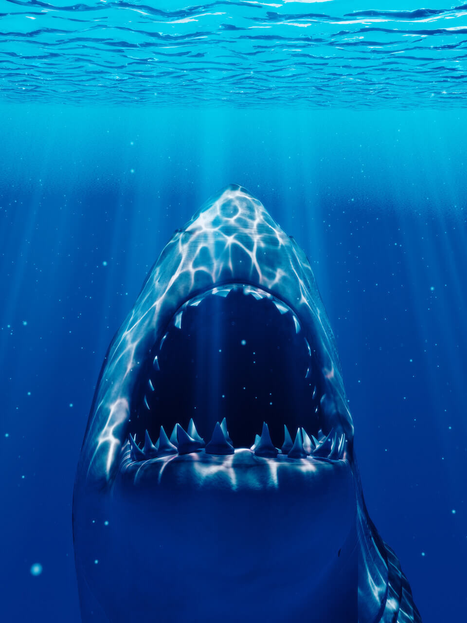 Tête requin blanc