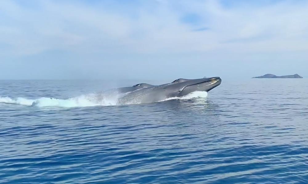 Vidéo Baleine Bleue