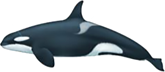 Orque type 1 femelle