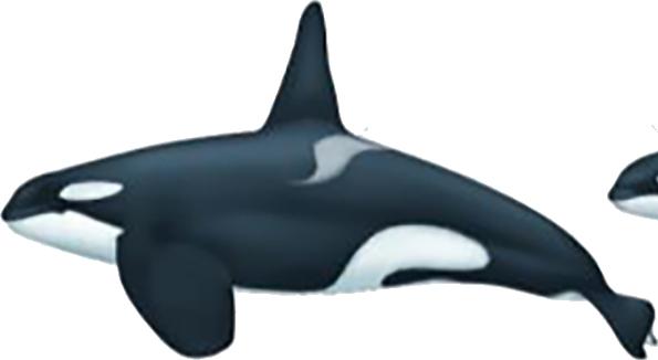 Orque type 1 mâle