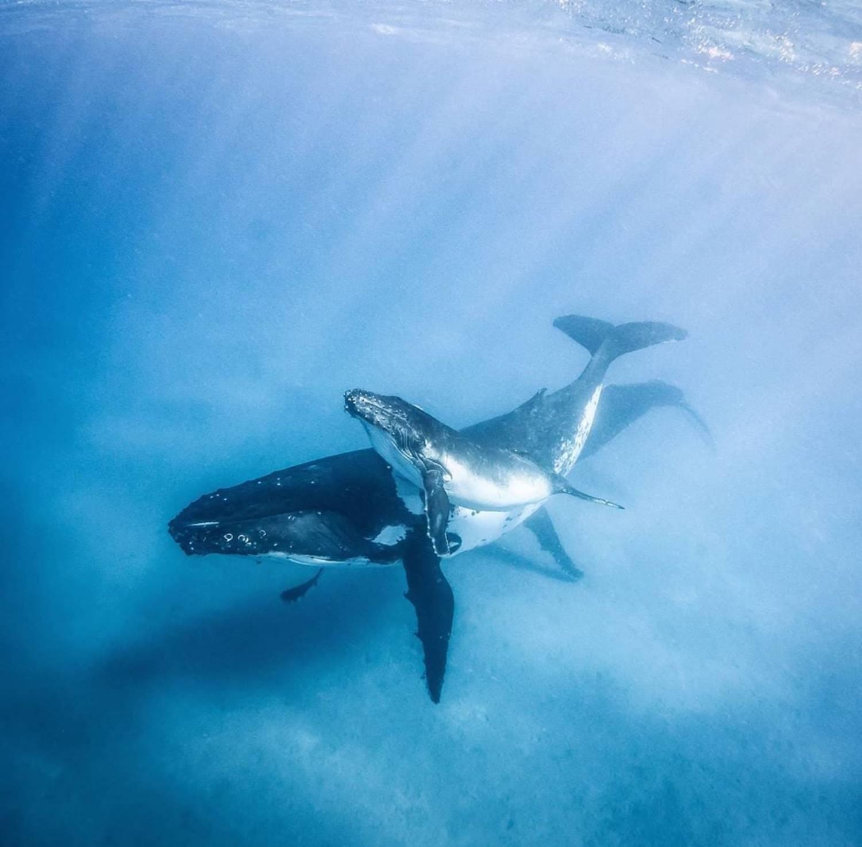 Baleineau et sa mère
