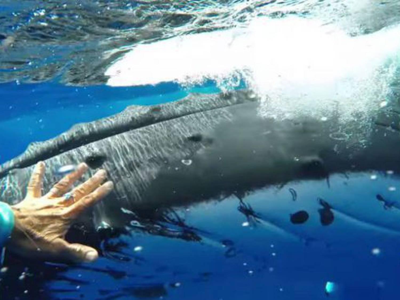 Nan Hauser et baleine à bosse