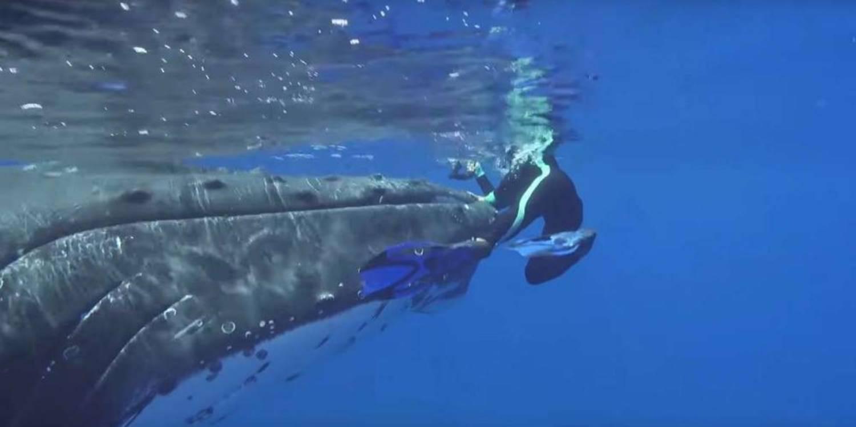 Nan Hauser sur le nez d'une baleine à bosse