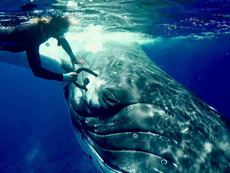 Nan Hauser face à l'oeil de baleine à bosse