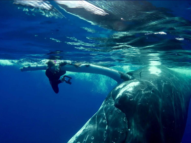 Nan Hauser sous la pectorale d'une baleine à bosse