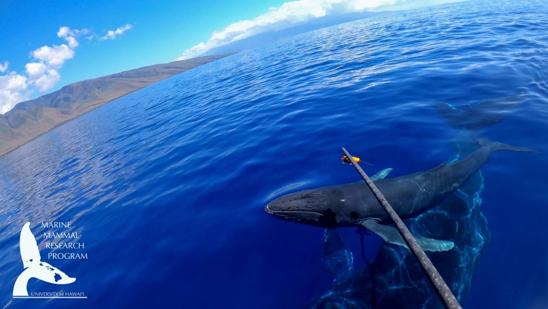 Pose caméra baleine