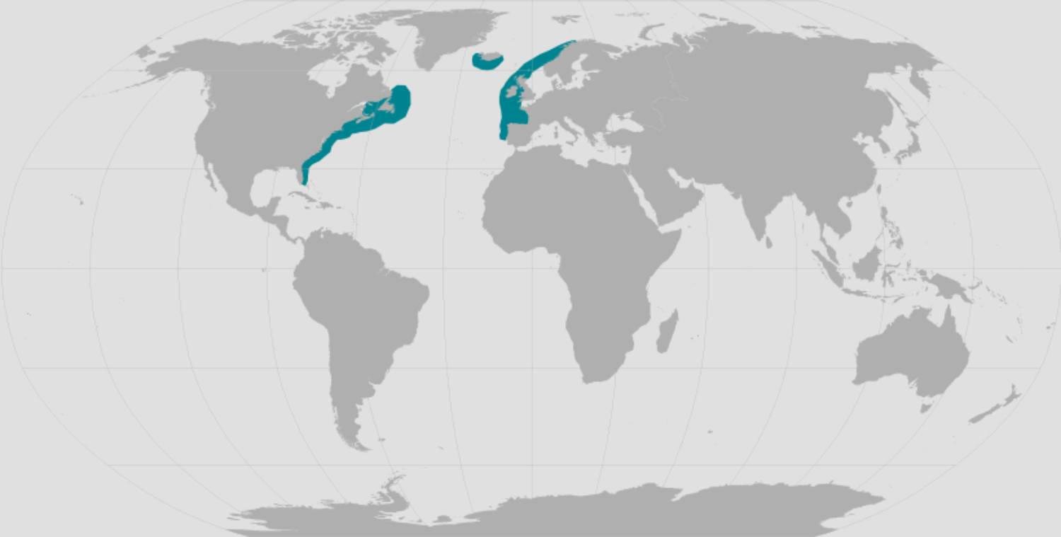 Habitat baleine franche