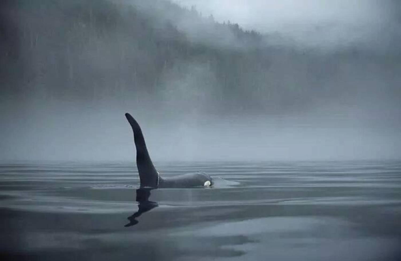 Aileron d'orque