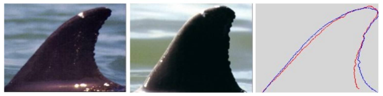 Nageoire dorsale identification
