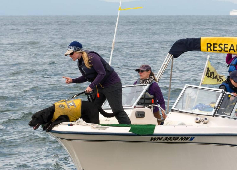 Tucker, le chien renifleur de caca de baleine