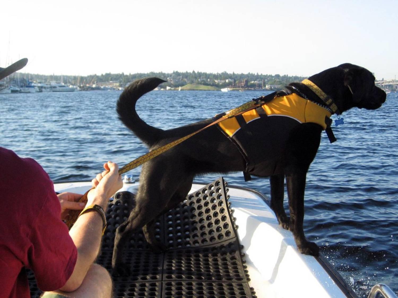 Tucker détecte le caca de baleine
