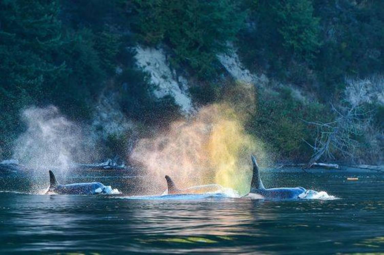 Livre sur les orques 2