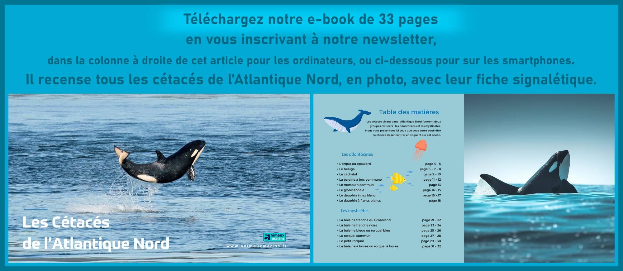 Newsletter Animaux Marins